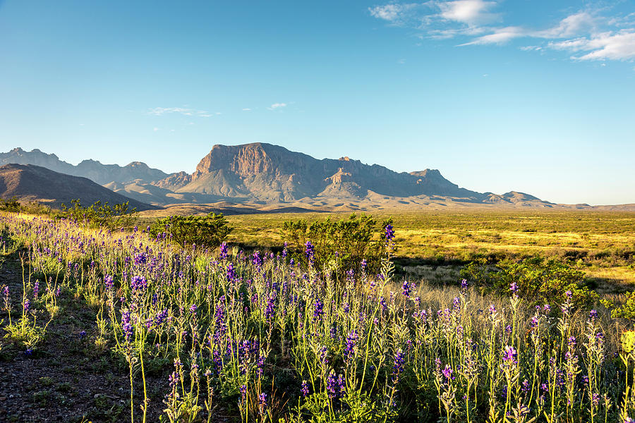 Morning In Big Bend Photograph