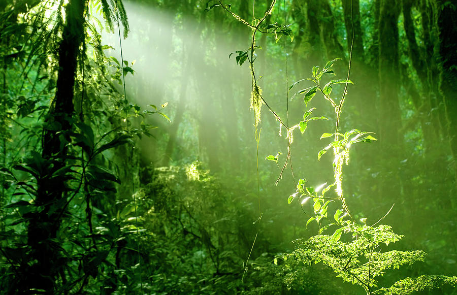 Morning In Rainforest Photograph by Vaara