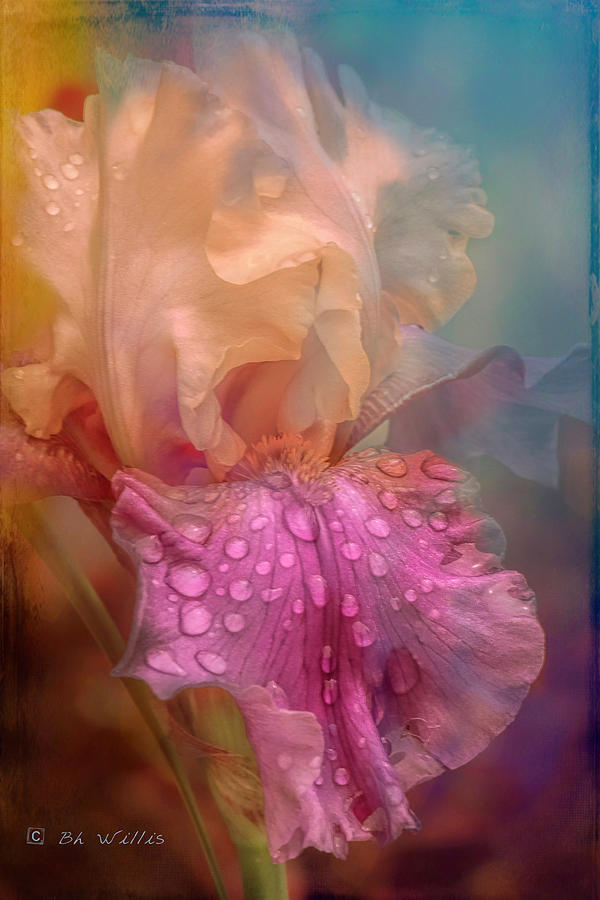Morning Iris by Bonnie Willis