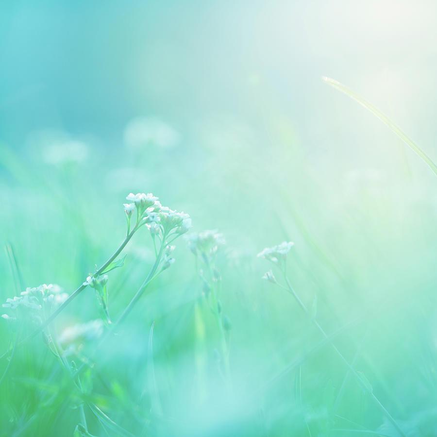 Morning Photograph by Jeja