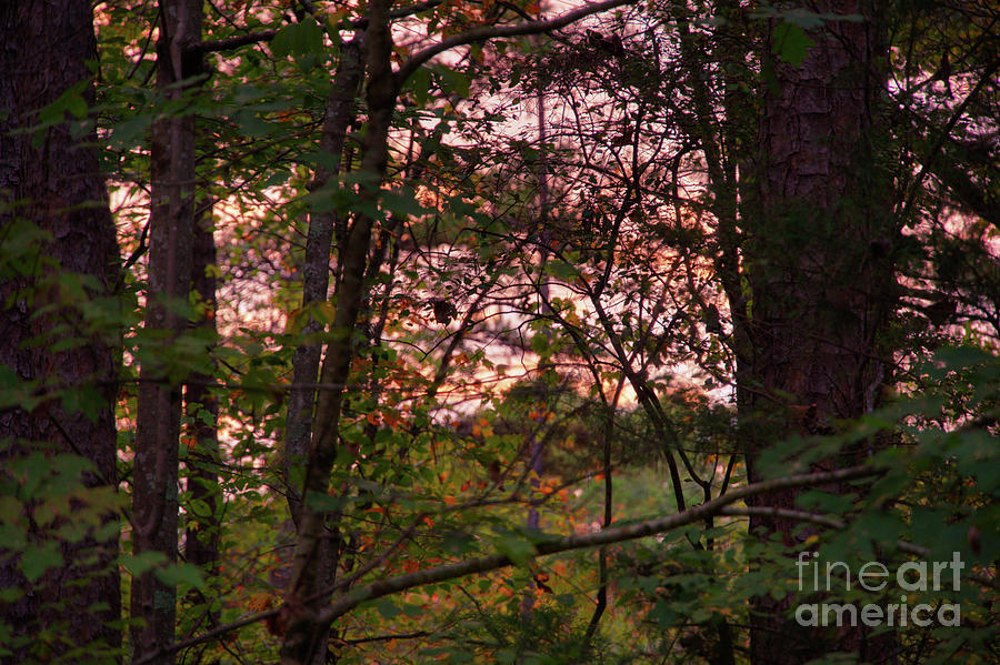 Morning Light by Daniel Brinneman