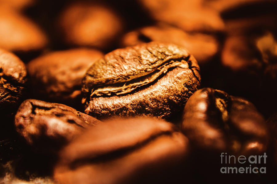 Brown Photograph - Morning Light by Jorgo Photography - Wall Art Gallery