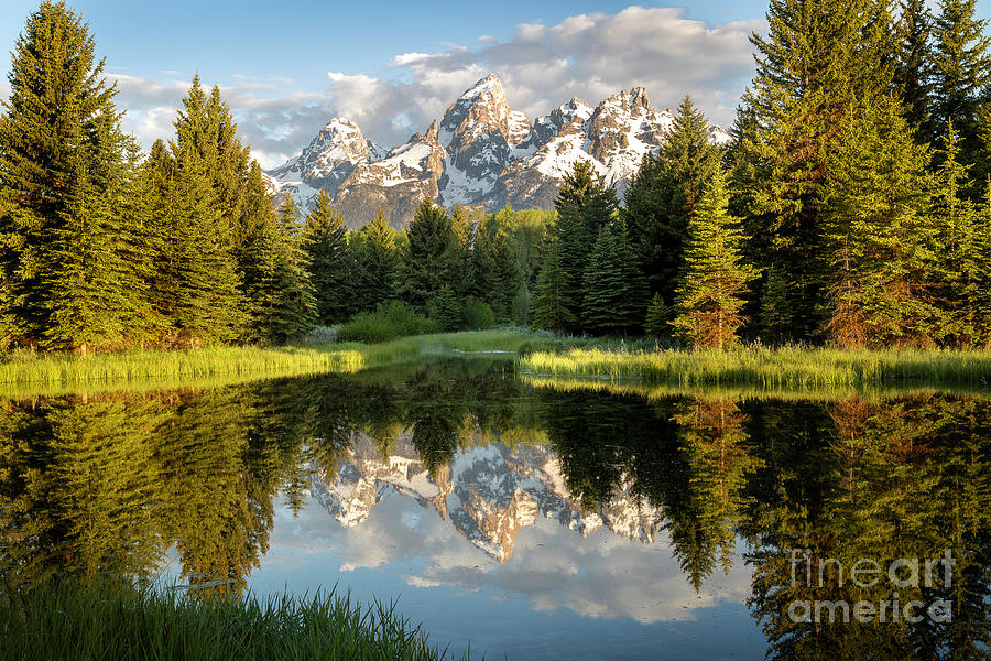 Morning Light on the Grand Tetons at Schwabacher Landing by Ronda Kimbrow
