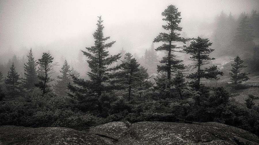Morning Mist BW by Robert Fawcett