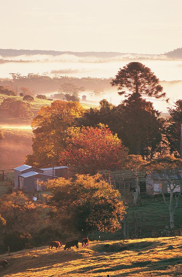 Morning Mist Over South Coast Farmland Photograph by Auscape / Uig