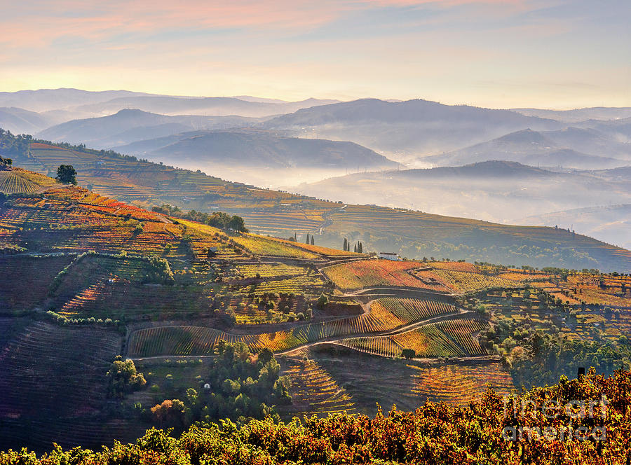 morning mists in the Douro Valley by Mikehoward Photography