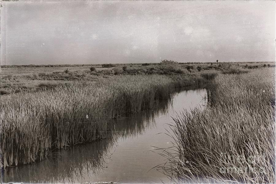 Morning on the Marsh by Gary Richards