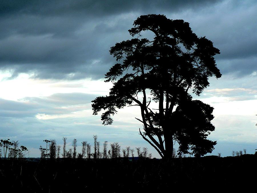 Tree Photograph - Morning Sky Blues by Lynne Iddon
