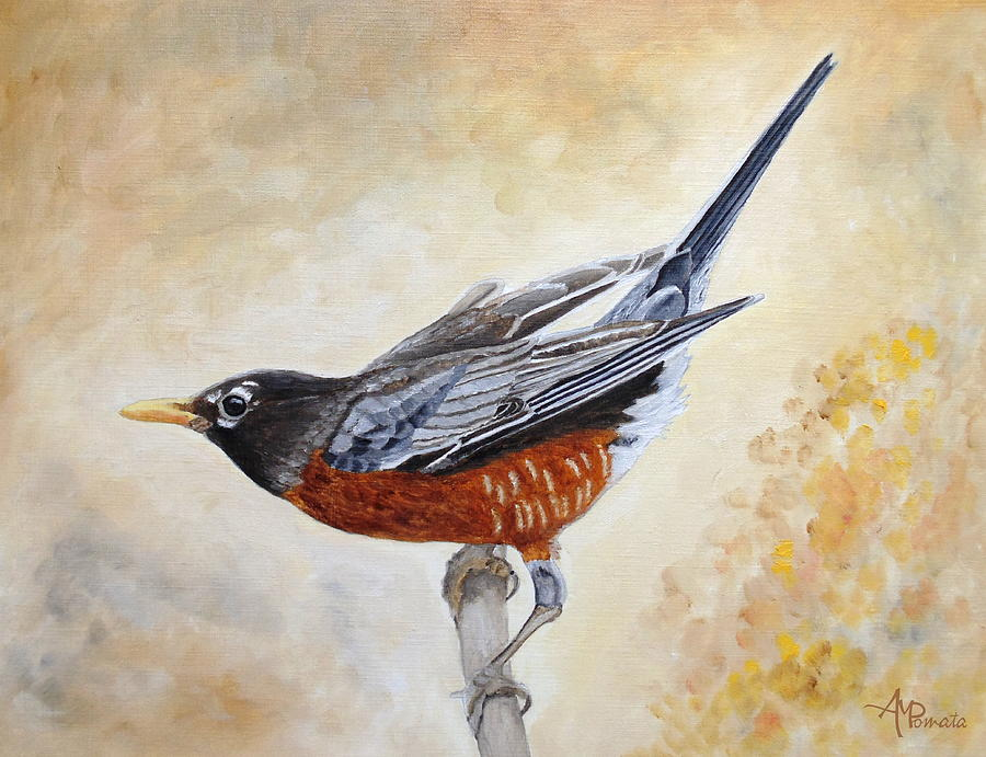 Morning Stretch American Robin by Angeles M Pomata