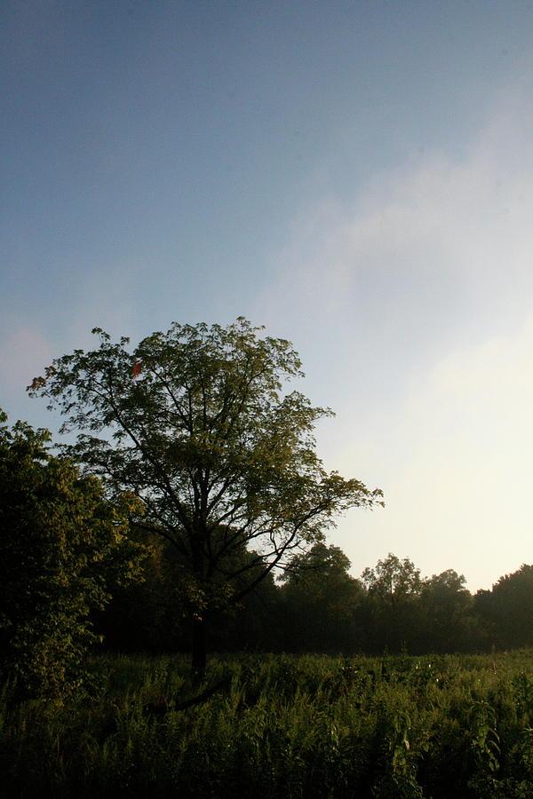 Morning Sugar Grove Break by Dylan Punke