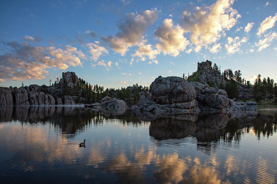 Morning Swim, Sylvan Lake by Denise Bush