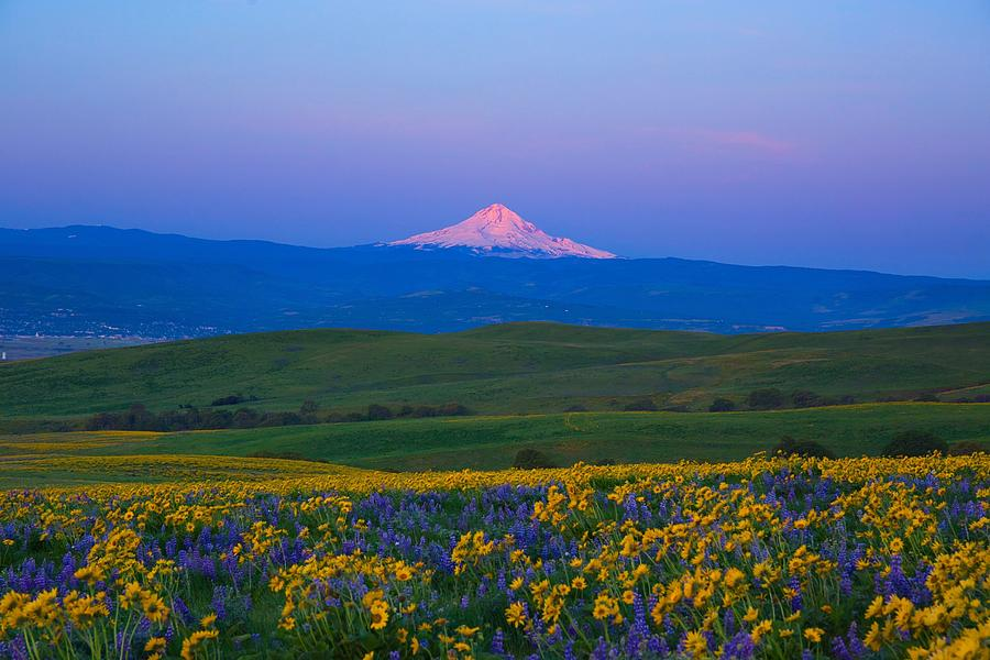 Morning view of Mount Hood by Lynn Hopwood