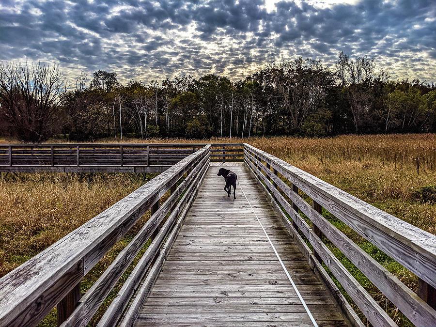 Morning Walk by Randy Scherkenbach