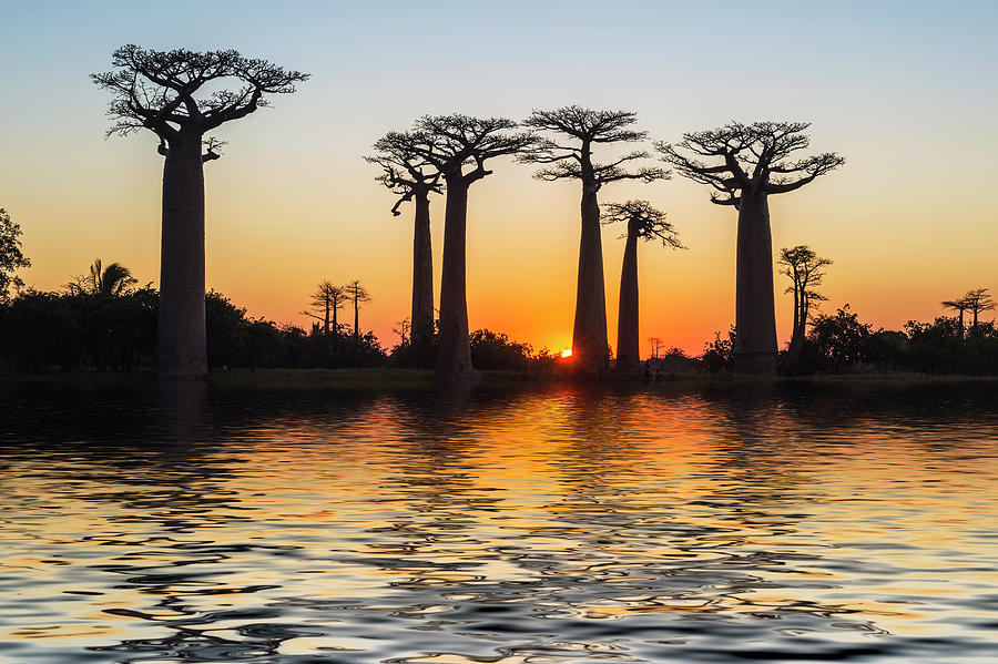 Morondava, Baobab Alley Photograph by Gabrielle Therin-weise