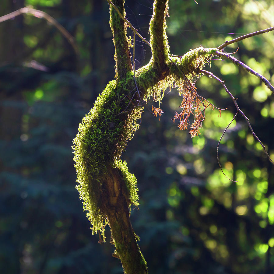 Moss Covered Deadwood by Dave Matchett