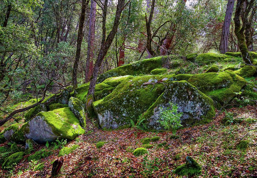 Moss Covered Granite Rocks by Robert Blandy Jr