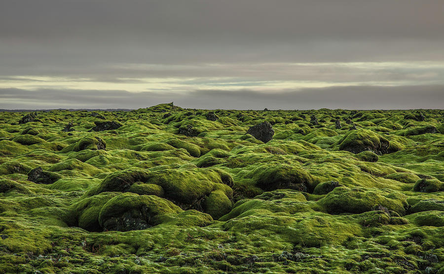 Moss Covered Lava Field On Route 1 Photograph by Ed Norton