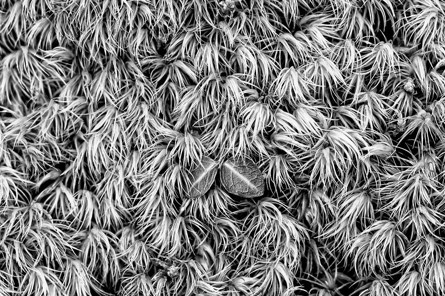 Moss by Dawn J Benko