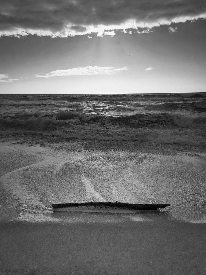 Moss Landing Driftwood by Patrick Cosgrove