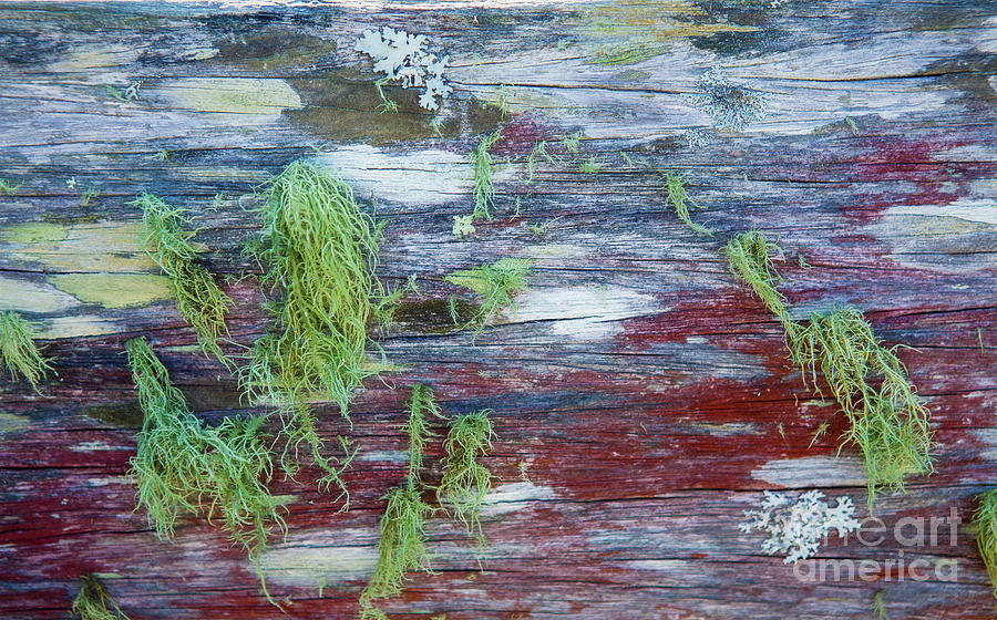 Moss Photograph - Moss On Old Fence by Sheila Smart Fine Art Photography