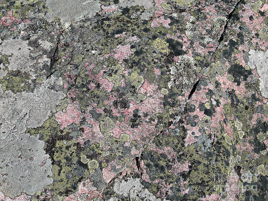 Moss on rock by Chani Demuijlder