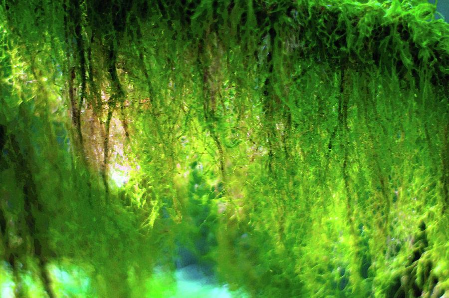 Moss Rain by Tikvah's Hope