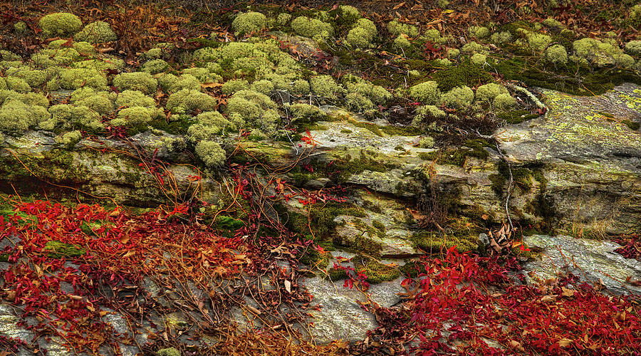 Moss, Rocks, and Vines by SL Ernst