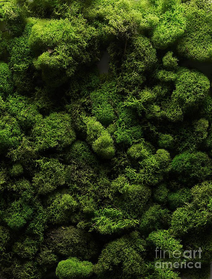 Moss Photograph by Shana Novak