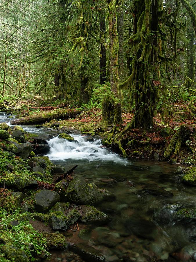Mossy Cascade by Steven Clark