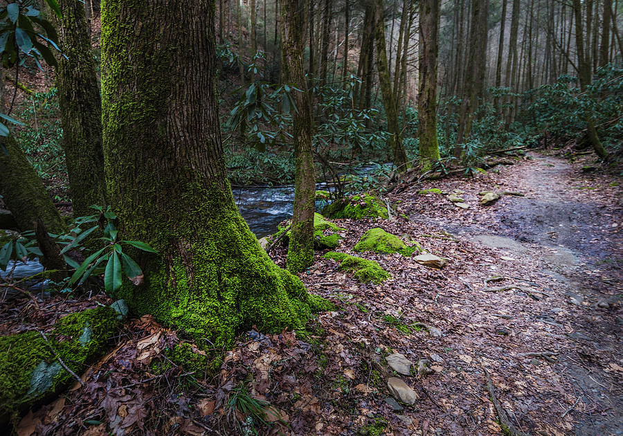 Mossy Forest Trail by Keith Smith