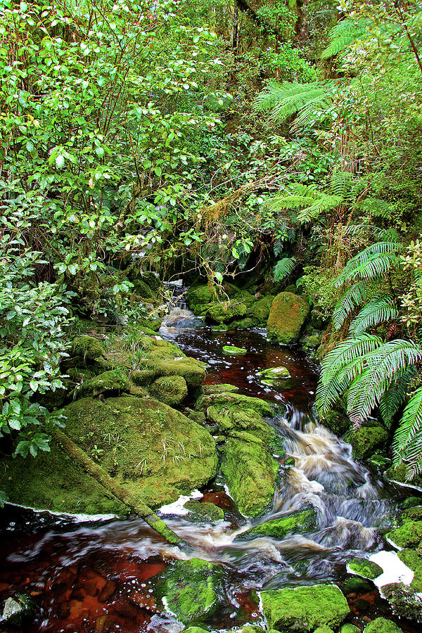 Mossy Mountain Stream by Nareeta Martin