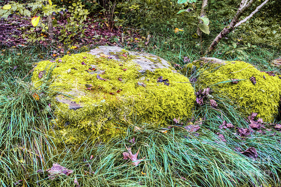 Nature Photograph - Mossy Rock by James Foshee