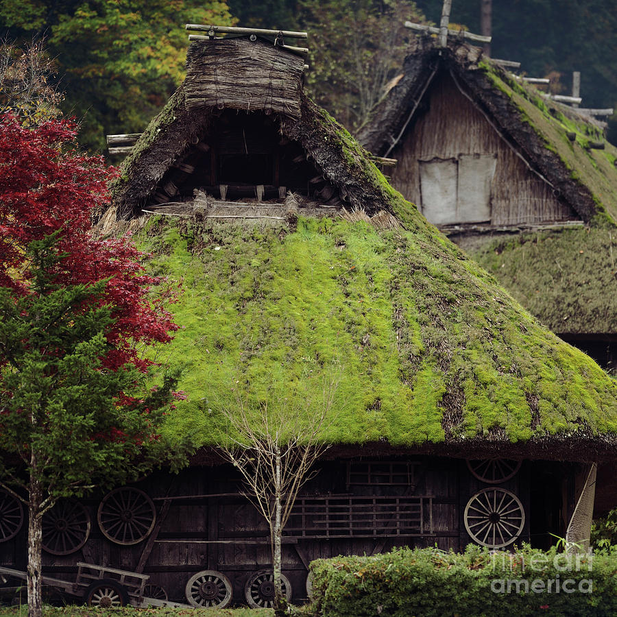 Mossy Thatched Roofs Of Traditional Japanese Gassho Houses