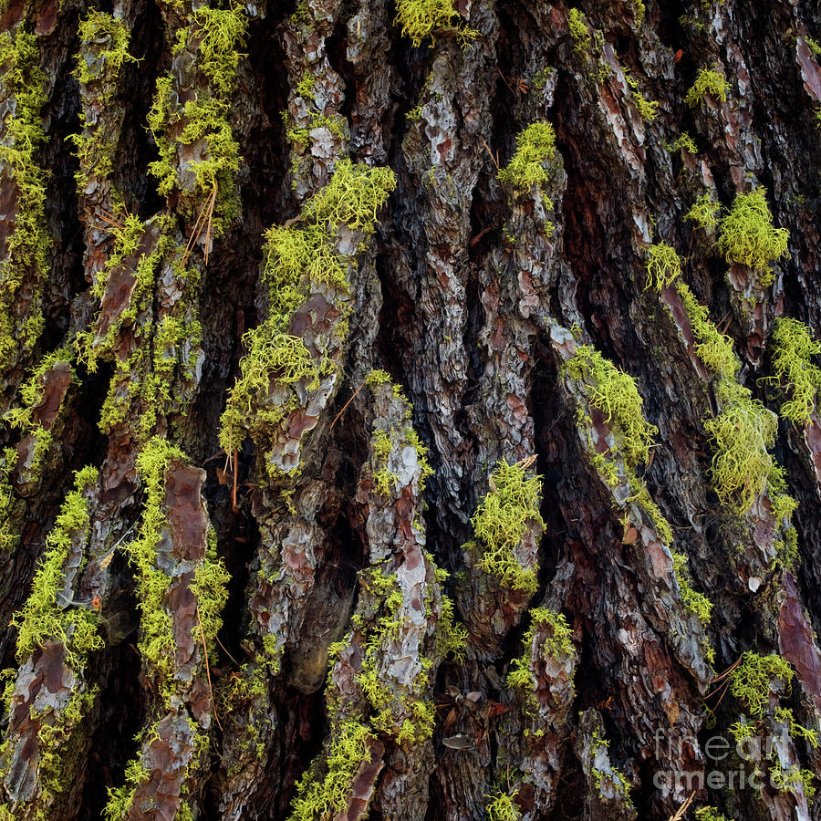 Mossy Tree Trunk Texture - Organic Patterns and Textures by Charmian Vistaunet