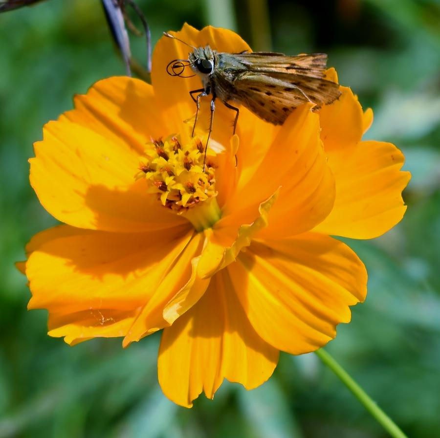 Moth and Flower by Eileen Brymer
