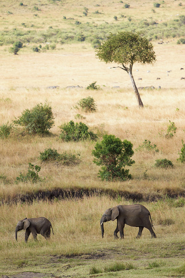 Mother And Baby Elephant In Savanna Photograph by Universal Stopping Point Photography