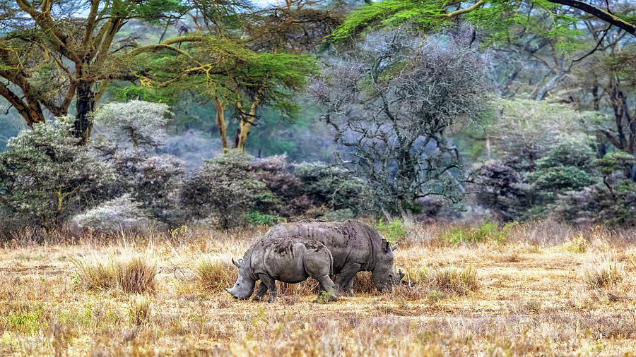 Mother and Baby White Rhinos in Lake Nakuru by Susan Schmitz