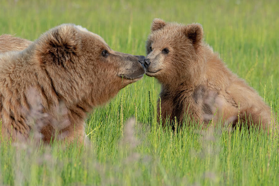 Mother and Cub by Mark Hunter