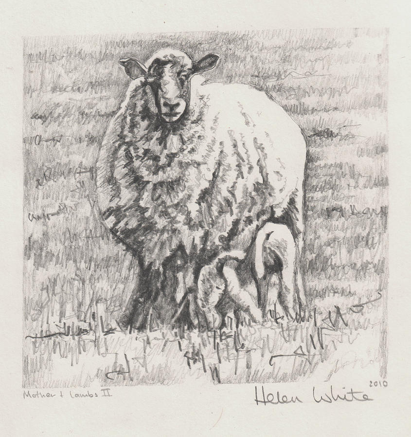 Sheep Drawing - Mother And Lambs by Helen White