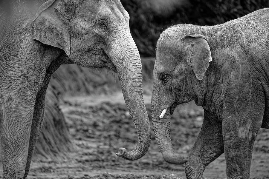 Mother and Young One by Jonathan Davison