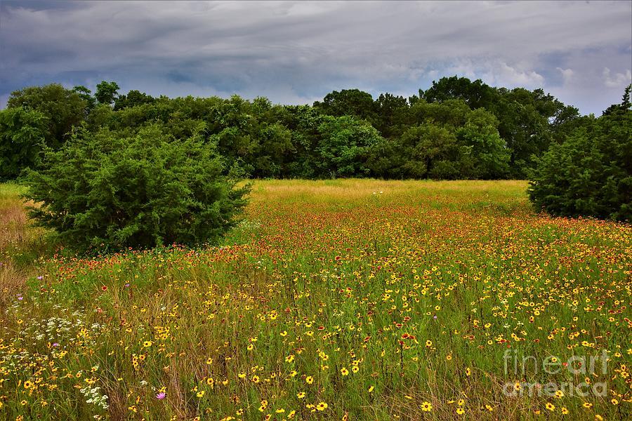 Mother Neff Wildflowers Photograph