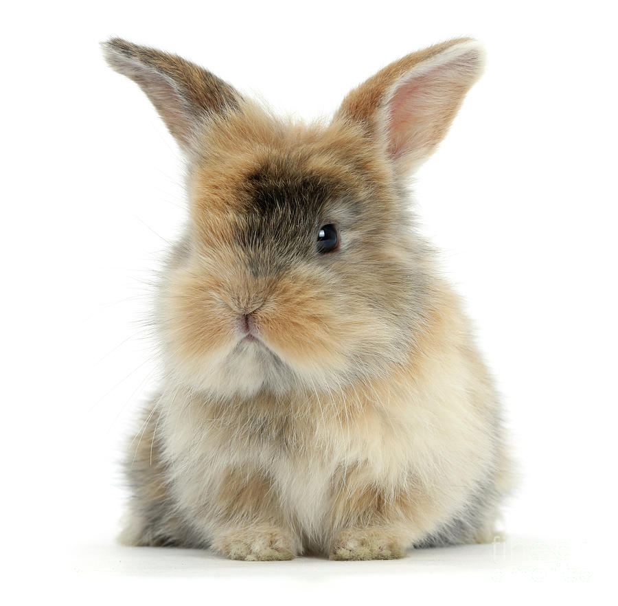 Motley Love Bunny by Warren Photographic
