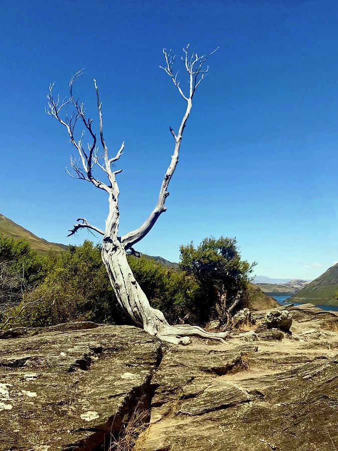 Mou Waho Island, Lake Wanaka, New Zealand by Sarah Lilja
