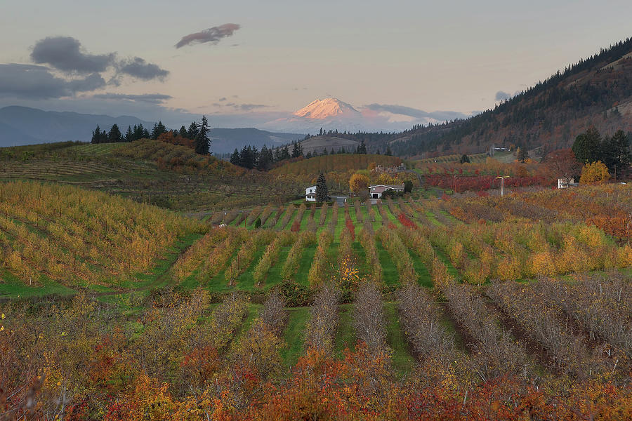 Hood River Photograph - Mount Adams at Hood River Oregon during Sunset by David Gn