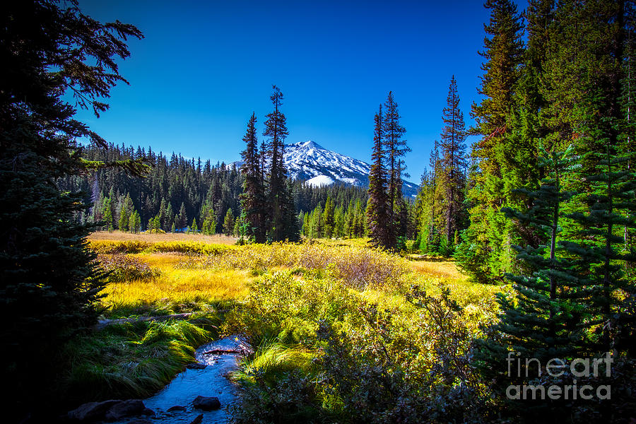 Mount Bachelor and Meadow by Stan Townsend