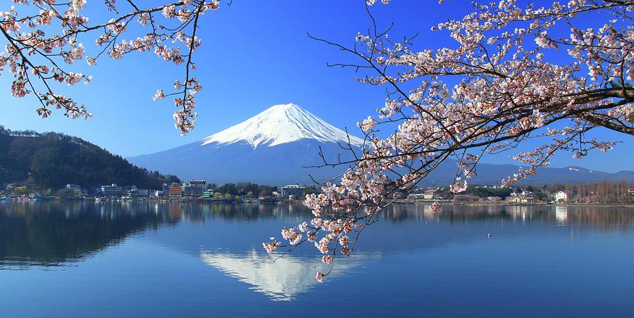 Mount Fuji And Sakura Photograph by Photo By Prasit Chansareekorn