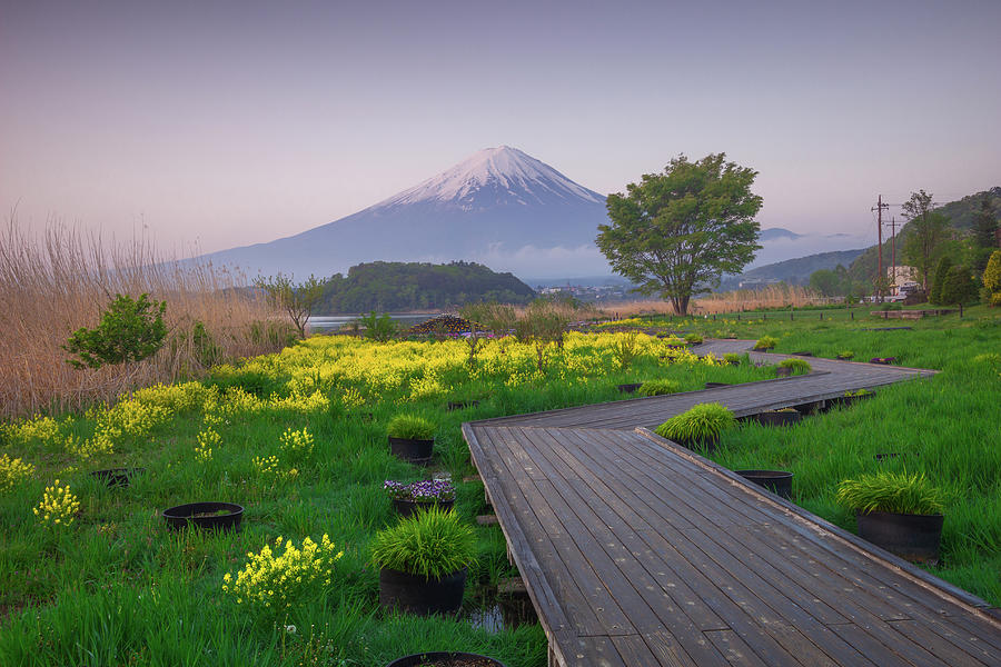 Mount Fuji Park by Francis Ansing