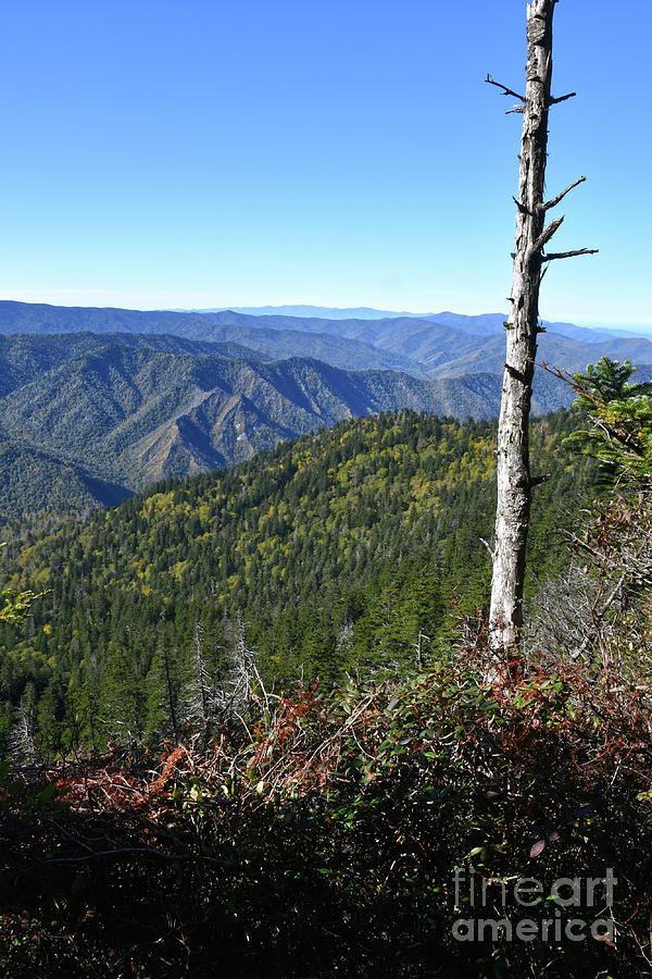 Mount LeConte 8 by Phil Perkins