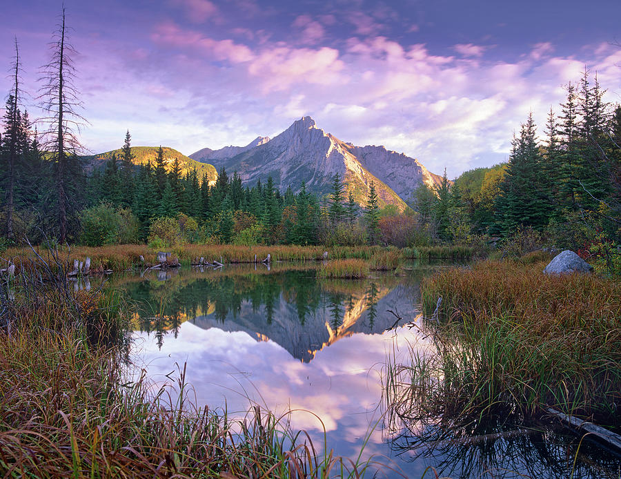 Mount Lorette And Spruce Trees Photograph by Tim Fitzharris/ Minden Pictures