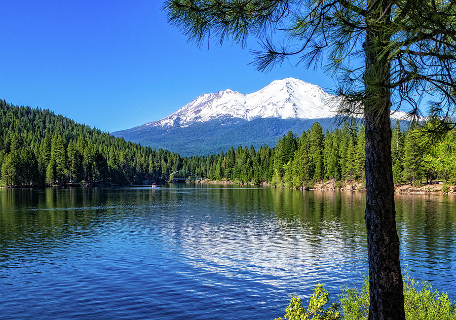 Mount Shasta from Lake Siskiyou by Carolyn Derstine